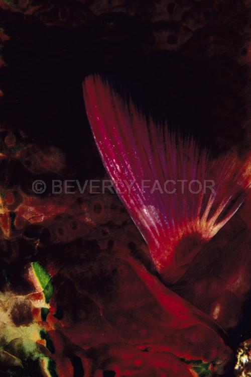 Abstract;Seaduction;Underwater;ocean;sea;Black;Red;Green;Beige;129. Red Mystery – Fiji