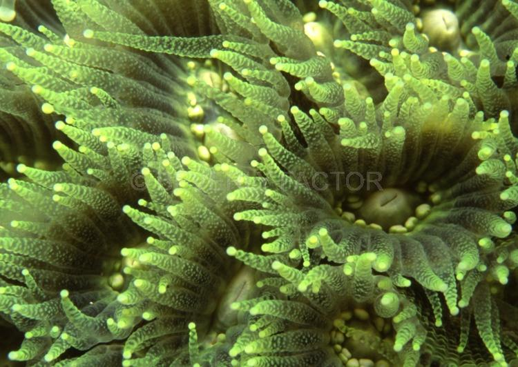 DIVING;UNDERWATER;Seaduction;ocean;sea;Abstract;Green;White: A8.;Tender Moment - Indonesia