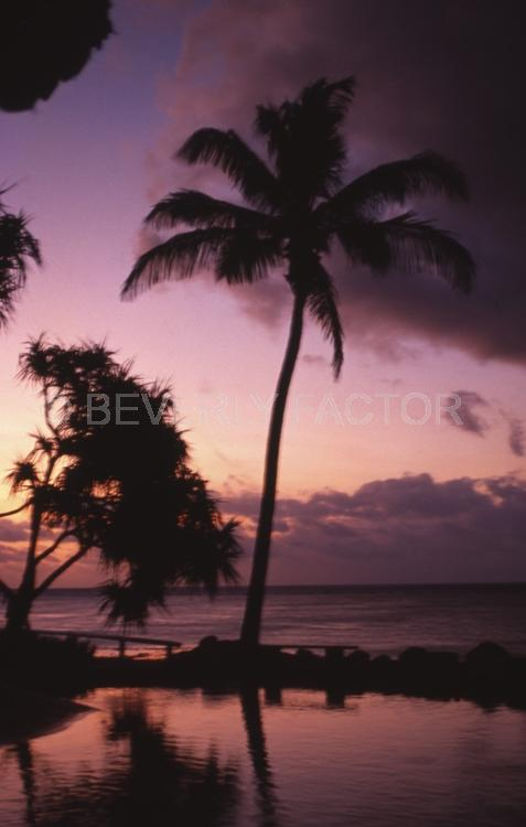 Island;Sunset;sky;water;red;palm trees;sillouettes;ocean;australia;purple