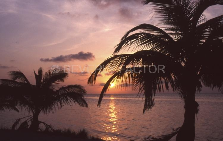Island;belize;Sunset;sky;sun;water;red;palm trees;sillouettes;ocean