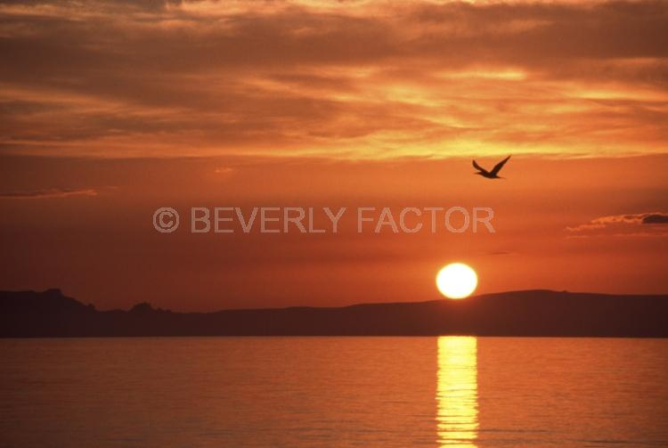 Island;bird;La Paz;mexico;Sunset;sky;sun;water;red;palm trees;sillouettes;ocean