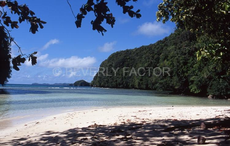 Island;Palau;trees;palm trees;blue water